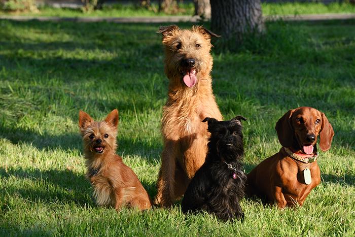 Obedience Dog Training in Plano & Garland, TX | K-9 University